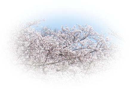 20100410_ikoma_1