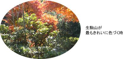 20101201_ikoma_2